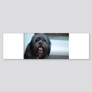 smiling lhasa type dog Bumper Sticker