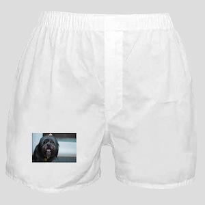 smiling lhasa type dog Boxer Shorts