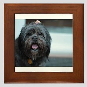 smiling lhasa type dog Framed Tile