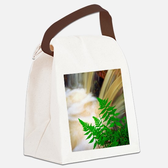 Ferrous thermal water Canvas Lunch Bag