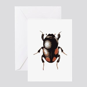 Insect beetle Greeting Cards