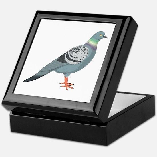Grey pigeon Keepsake Box
