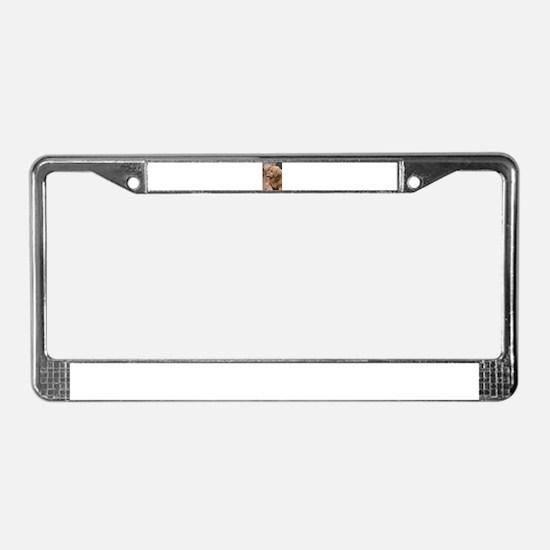 golden retriever serious License Plate Frame