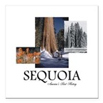 ABH Sequioa Square Car Magnet 3