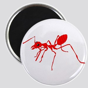 Red ant Magnets