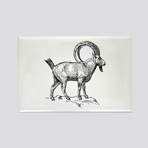 Alpine ibex with long horns Magnets