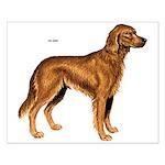 Irish Setter Dog Small Poster