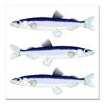 Capelin Square Car Magnet 3