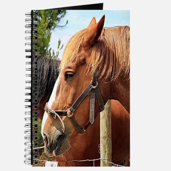 Two farm draft horses Journal