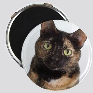 Tortie Cat Magnets