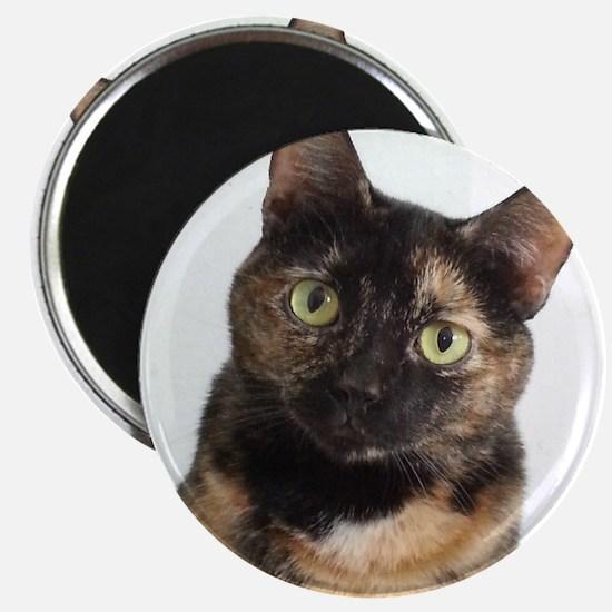 Tortie Cat Magnets