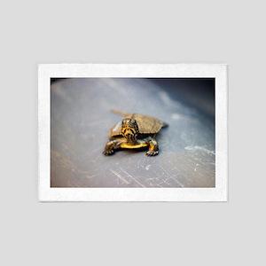 Turtle Stare 5'x7'Area Rug