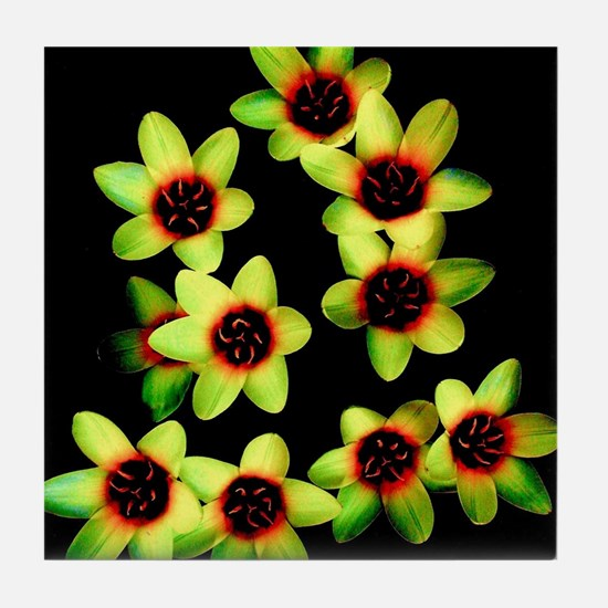 Yellow Flowers on a black Background Tile Coaster