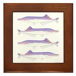 Cornish Jack Fish Framed Tile
