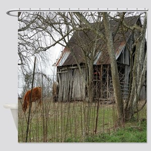 antique barn And Cows Shower Curtain