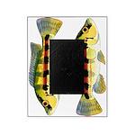Banded Jewel Cichlid Picture Frame