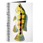 Banded Jewel Cichlid Journal