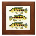 Banded Jewel Cichlid Framed Tile