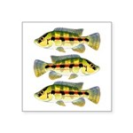 Banded Jewel Cichlid Sticker