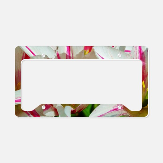 Cute Warm colors License Plate Holder