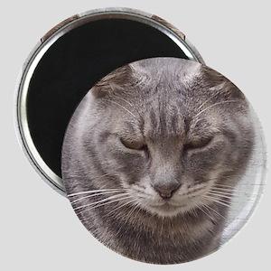 Gray Tabby Cat Magnets