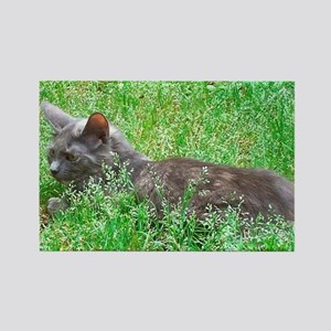 Dilute Tortie Cat Rectangle Magnet