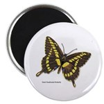 Giant Swallowtail Butterfly 2.25