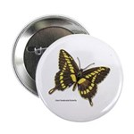 Giant Swallowtail Butterfly Button