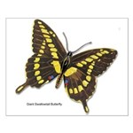 Giant Swallowtail Butterfly Small Poster