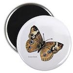 Buckeye Butterfly 2.25