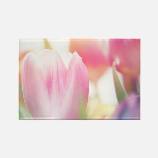 Beautiful Tulips Magnets