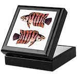 Ornate ctenopoma Keepsake Box