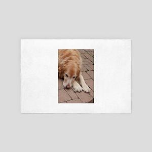 Nala the golden retriever reclining on 4' x 6' Rug