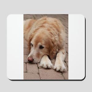 Nala the golden retriever reclining on b Mousepad
