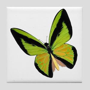 Pretty Green Butterfly Tile Coaster