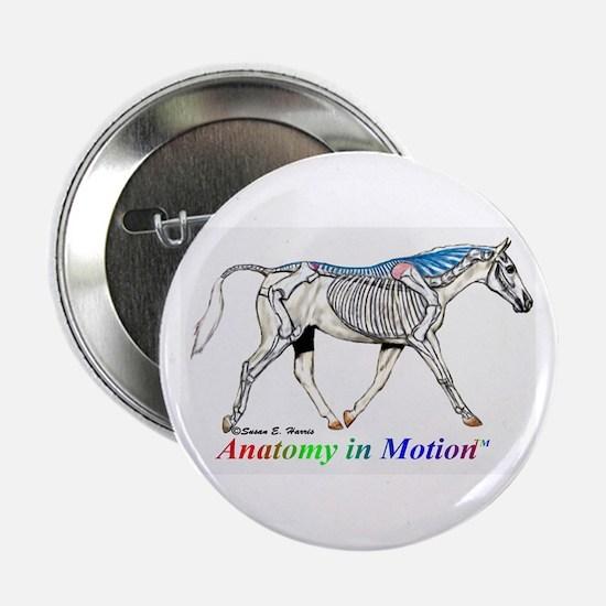 """Visible horse skeleton 2.25"""" Button"""
