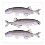 Baby Whale Fish Square Car Magnet 3