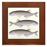 Baby Whale Fish Framed Tile