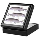Baby Whale Fish Keepsake Box