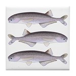 Baby Whale Fish Tile Coaster