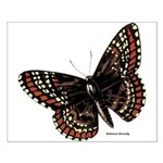 Baltimore Butterfly Small Poster