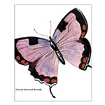 Colorado Hairstreak Butterfly Small Poster