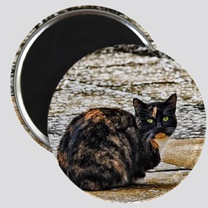 Tortoiseshell Cat Magnets
