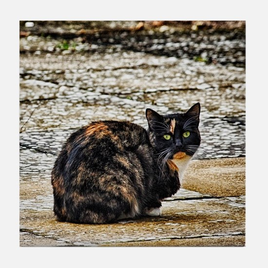 Tortoiseshell Cat Tile Coaster