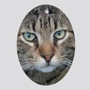 Brown Tabby Cat Oval Ornament
