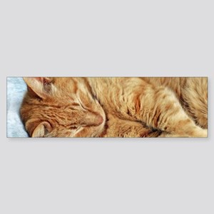Sleepy Kitty Bumper Sticker