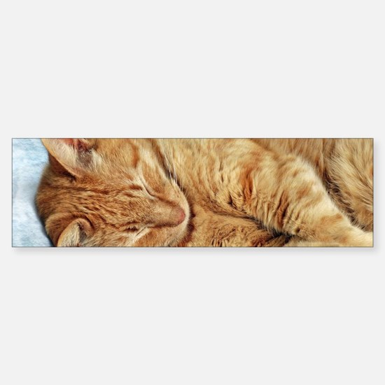 Sleepy Kitty Bumper Bumper Bumper Sticker
