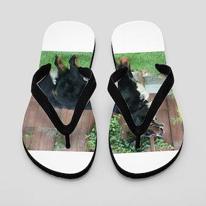 bernese mountain dog full Flip Flops