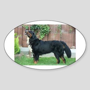 bernese mountain dog full Sticker