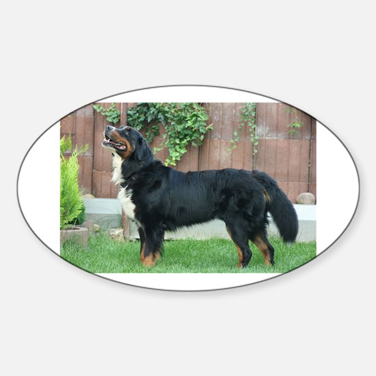 bernese mountain dog full Decal